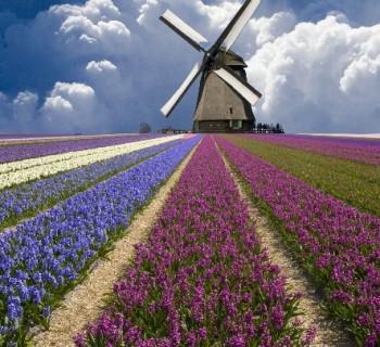 Северная Голландия Нидерланды. Что посмотреть в Северной Голландии?