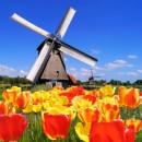 Праздник тюльпанов в Голландии - фото