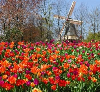 Парк цветов в Голландии - фото, описание