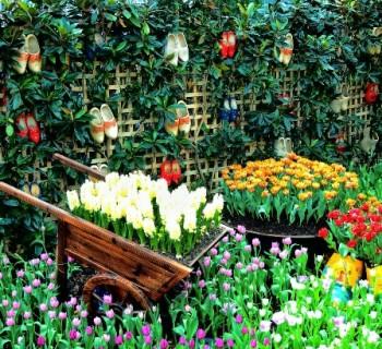 Праздники Голландии – традиции. Национальные праздники Голландии