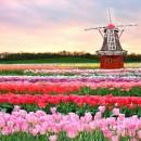 Сады Голландии