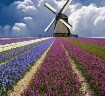 Поездка в Нидерланды