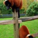 Зоопарк в Амстердаме – фото, цена, часы работы. Как добраться до зоопарка Амстердама