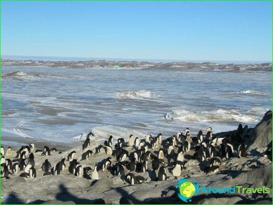 Davis Sea