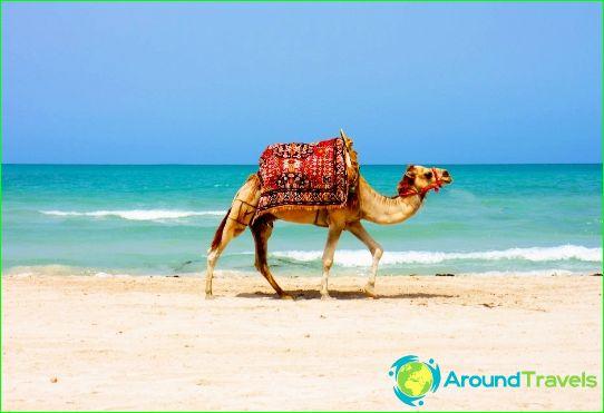 Празници в Тунис през февруари
