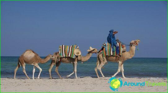 العطل في تونس في ديسمبر