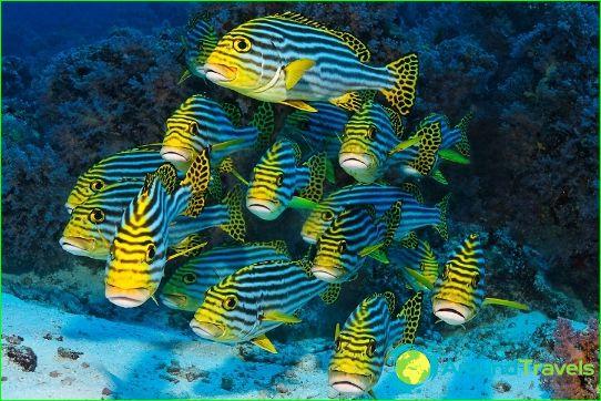 الغوص في جزر المالديف