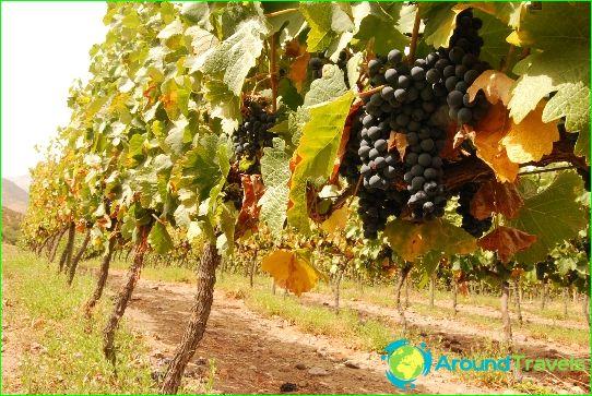 Chilen viinit