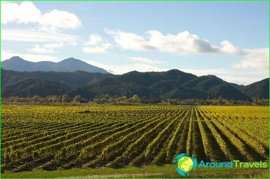 نبيذ نيوزيلندا