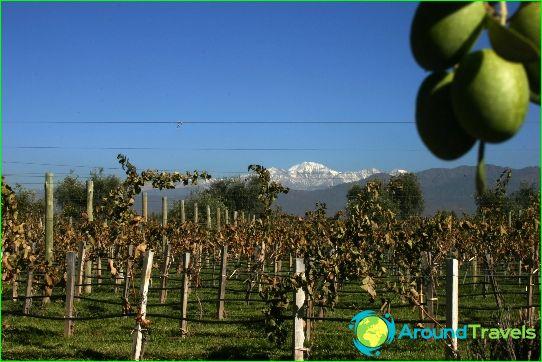Wijnen van Argentinië