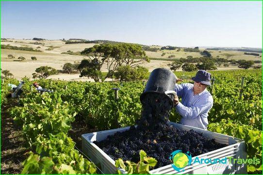 Wijnen uit Australië