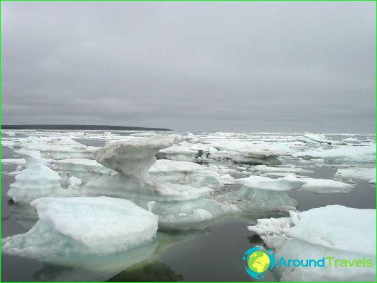 Itä-Siperian meri