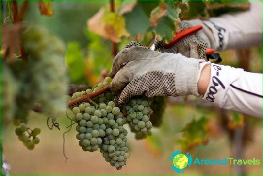Israelin viinit