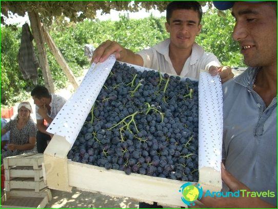 Uzbekistanin viinit