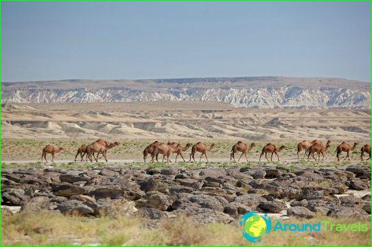 Региони на Туркменистан