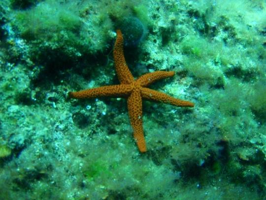 Sukellus Montenegrossa