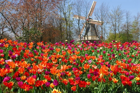 Kukkapuisto hollannissa