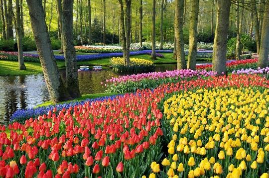 Bloemenpark in Holland