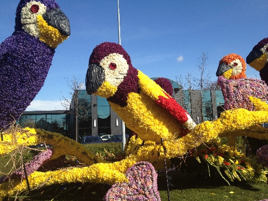 Flower Parade in Holland