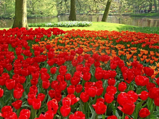 Holland parken