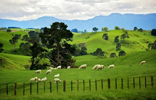Kenmerken van Nieuw-Zeeland