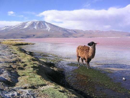 ملامح بوليفيا