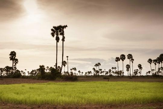 Vacances au Cambodge en juin