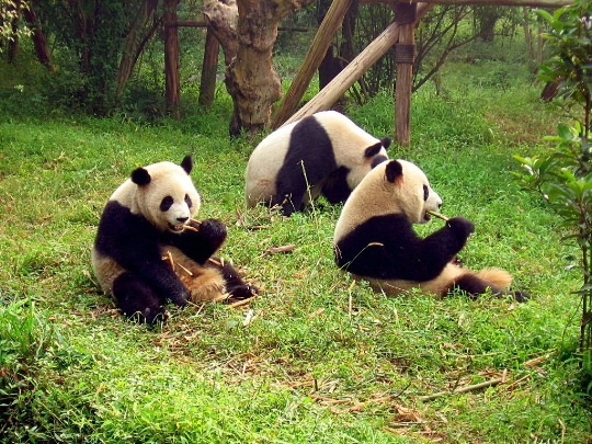Kiinan luonnonsuojelualueet