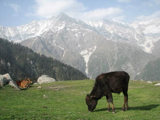 Intian luonnonsuojelualueet