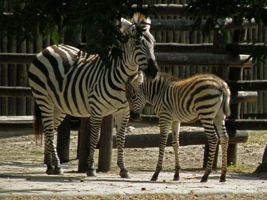 Eläintarha Varsovassa