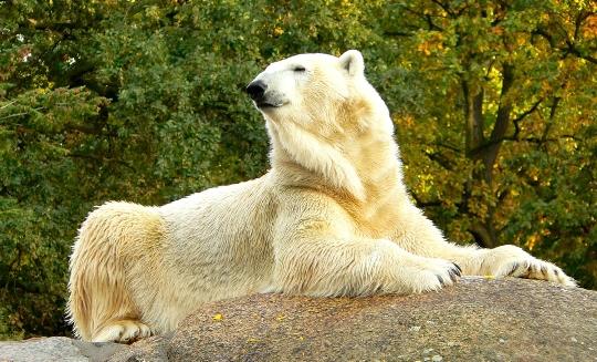 Eläintarha Berliinissä