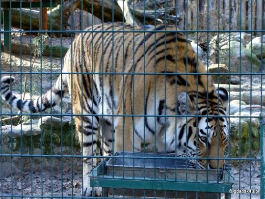 Gdanskin eläintarha