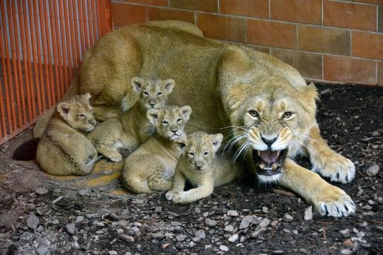 Eläintarha Budapestissa