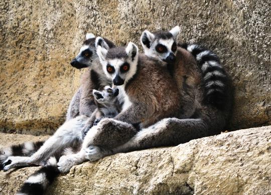 Limassolin eläintarha