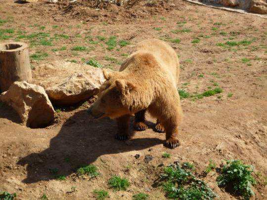 Ateenan eläintarha