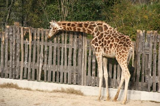 Zoo à Rome
