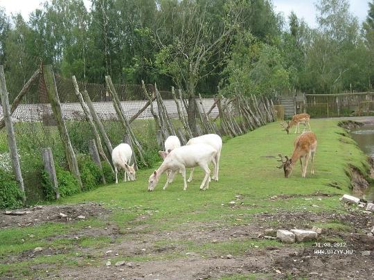 Зоологическа градина в Клайпеда