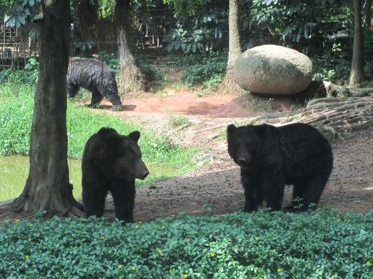 Гуанджоу зоопарк