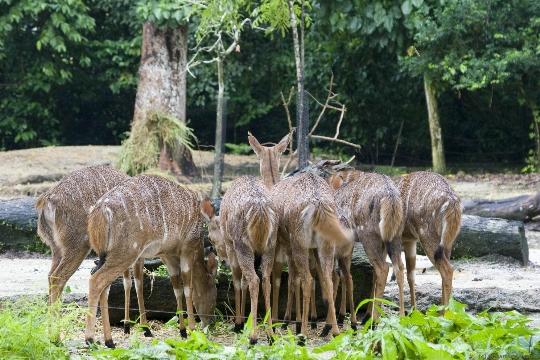 Singaporen eläintarha