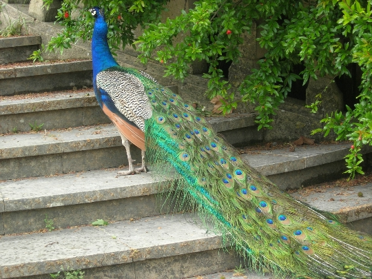 Лисабонски зоопарк