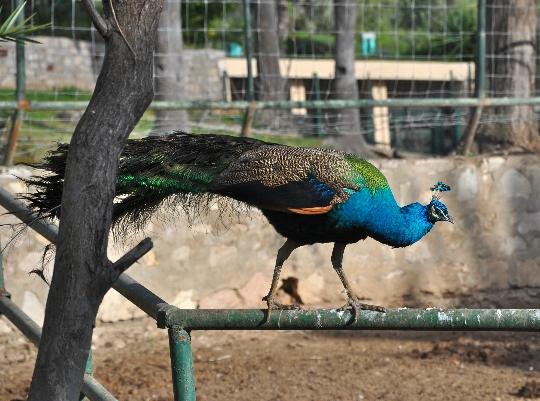 حديقة حيوان في تونس