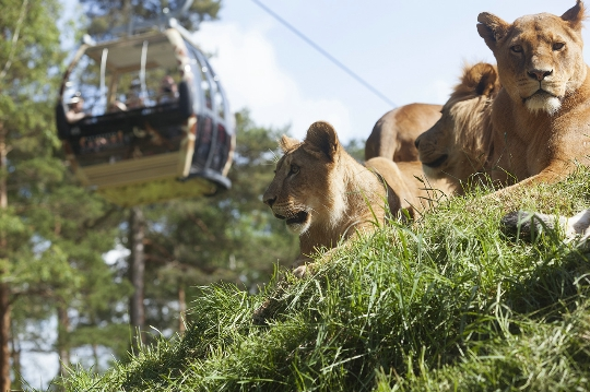 Tukholman eläintarha