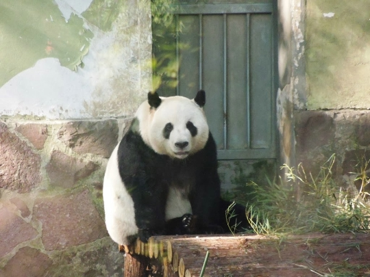 Eläintarha Shanghaissa