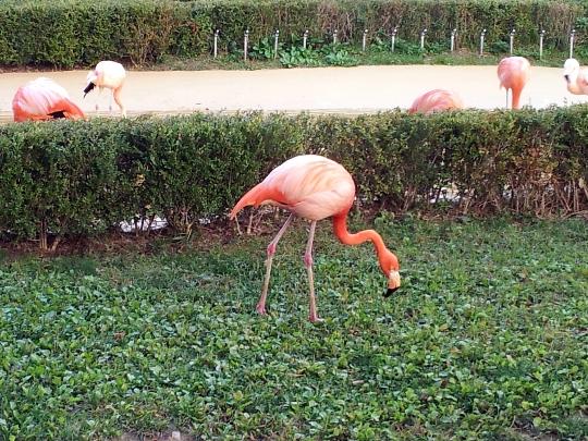 Zoo in Seoel
