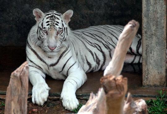 Зоопарк в Коломбо