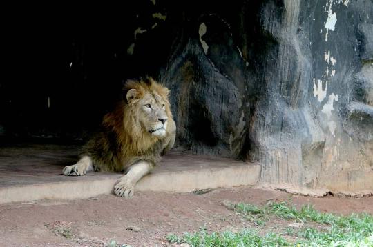 Eläintarha Colombossa
