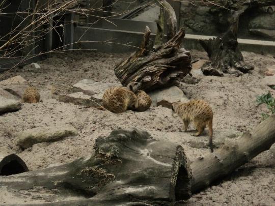 Зоопарк в Краков