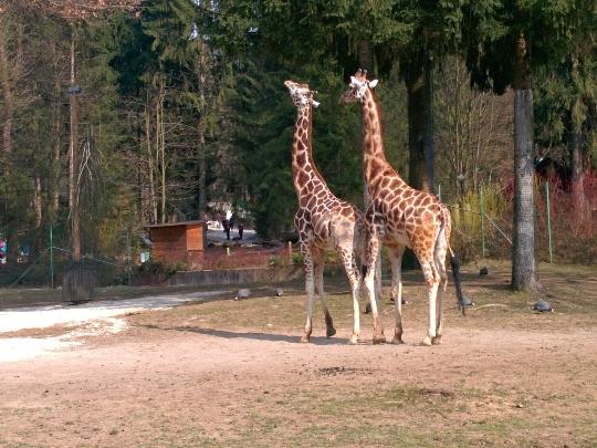 Ljubljanan eläintarha