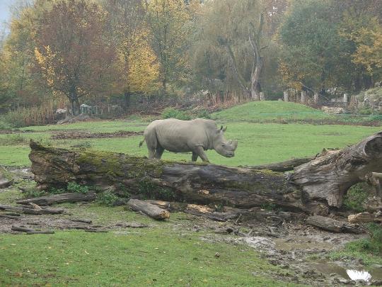 Salzburgin eläintarha