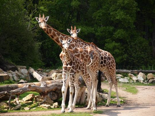 Leipzigin eläintarha